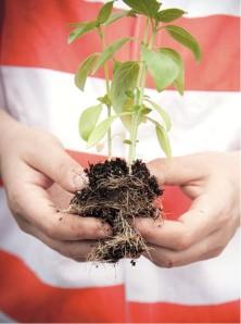 7-rikers greenhouse program - lindsay morris-gardenista.jpeg